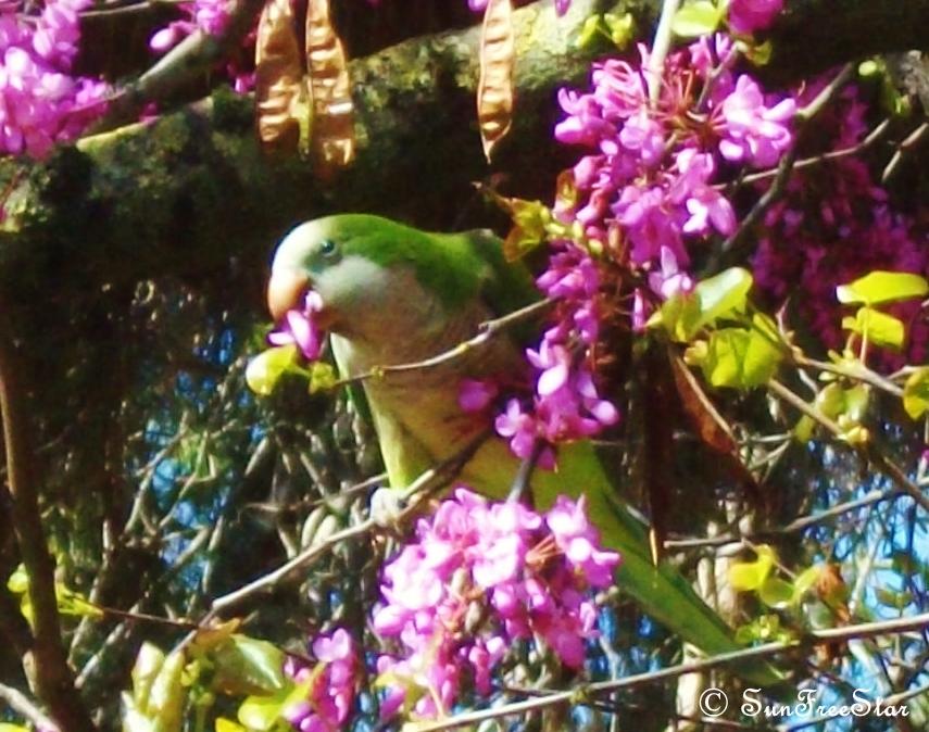 Parrot9